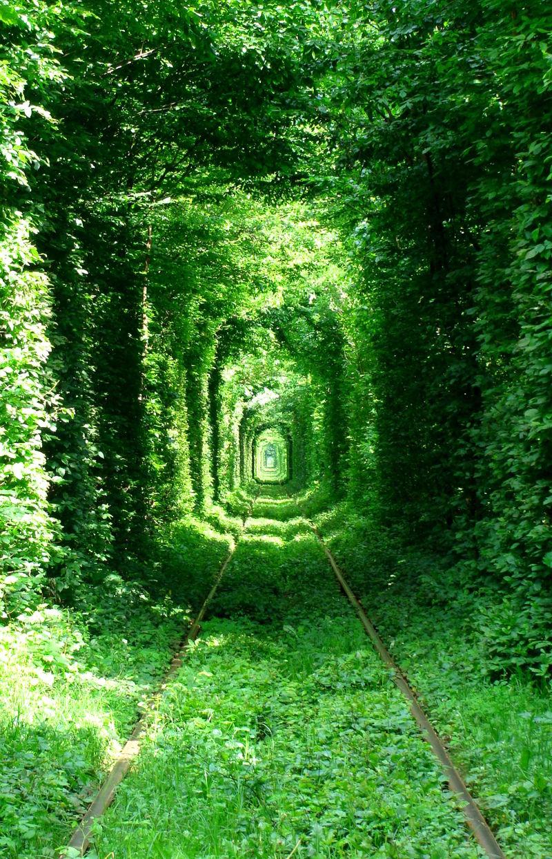 Тунель кохання. Фото: serhei/uk.wikipedia.org. Ліцензія: creativecommons.org/licenses/by/3.0