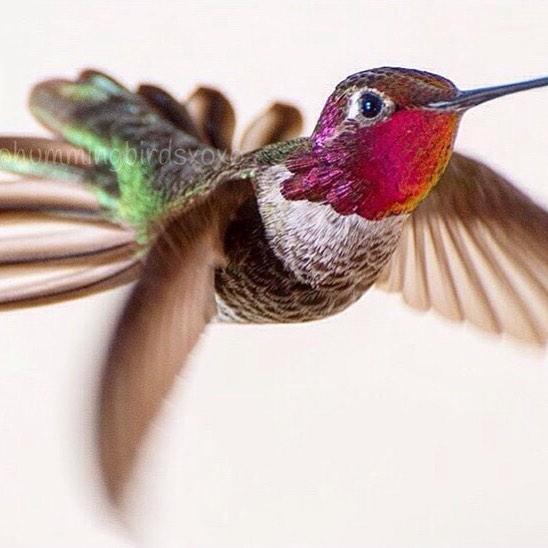 Фото: instagram.com/hummingbirdsxoxo