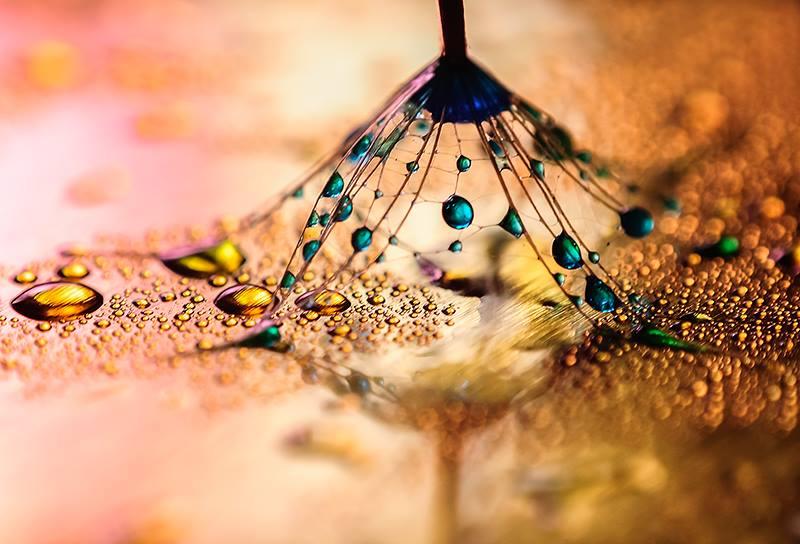 Фото: facebook.com/Ivelina.Blagoeva.Photography