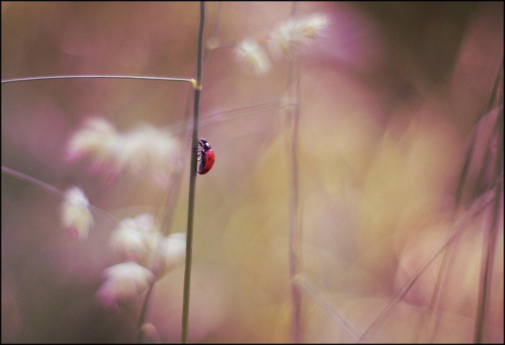 Работа Кшиштова Трояновски. Фото: artmisto.com