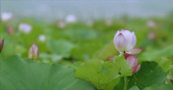 Місцевість у Китаї. Скріншот: Vime