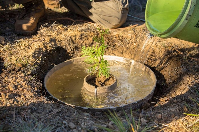 Фото: Land Life Company/facebook.com