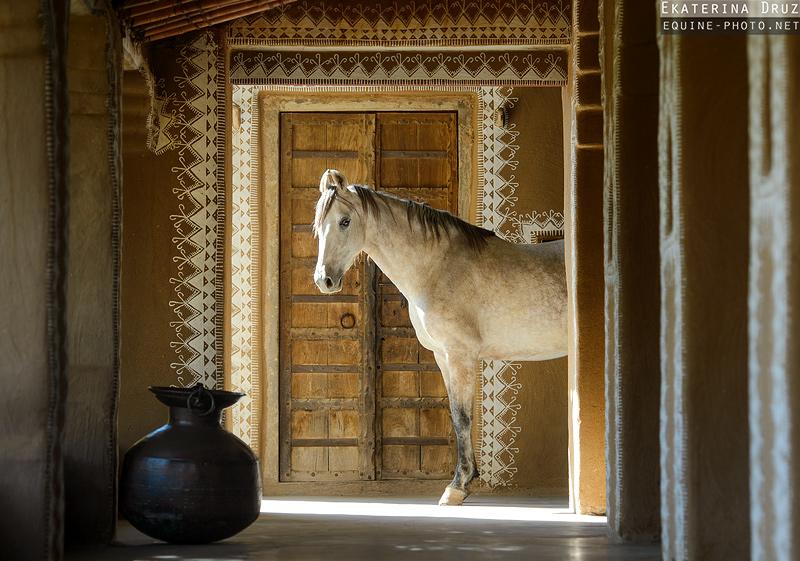 Коні. Фото: facebook.com/druz.photo