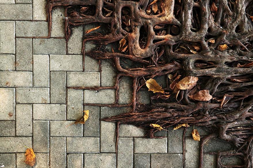 Фото: Wei-Feng Xue/flickr.com