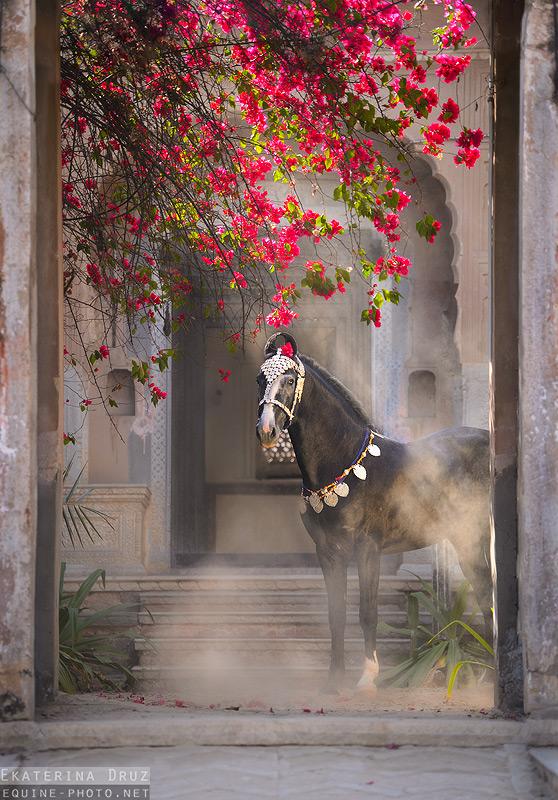 Лошади. Фото: facebook.com/druz.photo