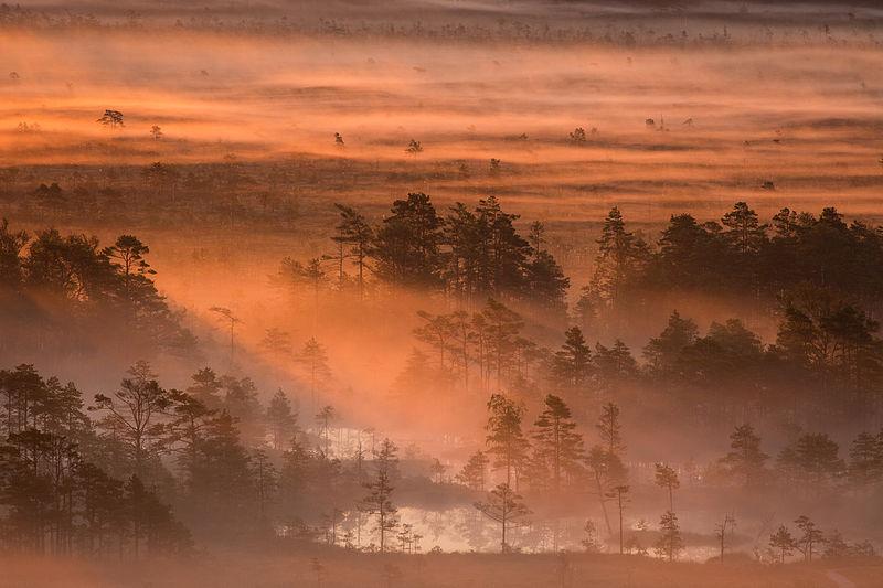 Чотирнадцяте місце: Ранок на болоті у заповіднику Луйтемаа, Пярну, Естонія. Фото: Märt Kose/wikilovesearth.org.ua. Вільна ліцензія CC BY-SA 3.0 ee