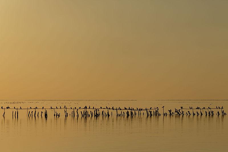 Восьме місце: Баклани у сутінках на солоному озері Вакаре, Франція. Фото: Ddeveze/wikilovesearth.org.ua. Вільна ліцензія CC BY-SA 3.0