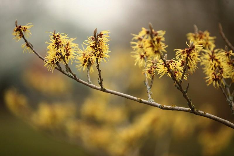 На ветках деревьев набухают почки. Фото: Dan Kitwood/Getty Images