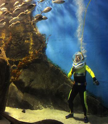 Мельбурн, Австралія. Спеціальний костюм дайвера дозволяє відвідувачам ходити під водою, оточеними акулами, гігантськими скатами та сотнями риб. Фото: WILLIAM WEST / AFP / Getty Images