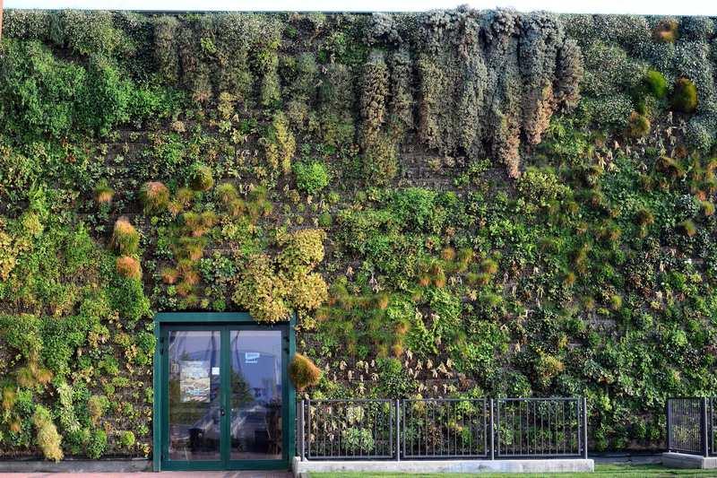 Розанно, Италия, 18 сентября. Вертикальный сад торгового комплекса Фиордалисо площадью около 1,3 тыс. квадратных метров, составленный из 44 тыс. растений и 200 цветков, вошёл в Книгу рекордов Гиннесса. Фото: OLIVIER MORIN/AFP/GettyImages