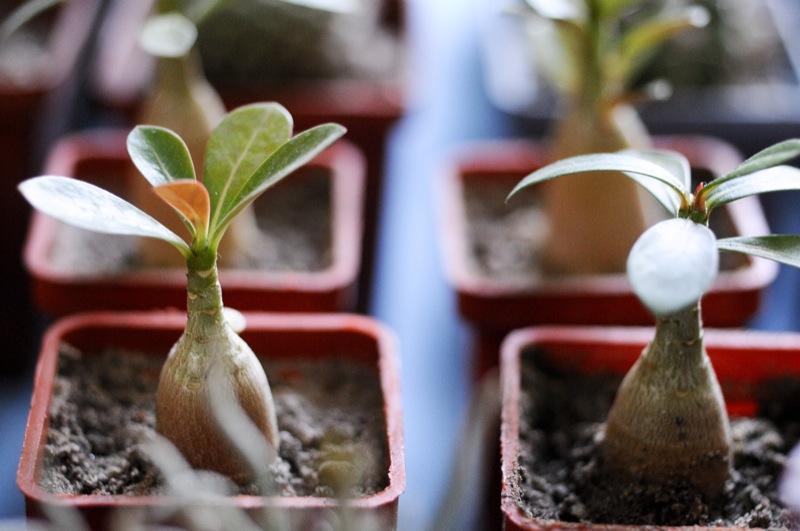 Выставка экзотических растений открылась в Киевском городском доме природы в Киеве 16 февраля 2012 года. Фото: Владимир Бородин/The Epoch Times Украина