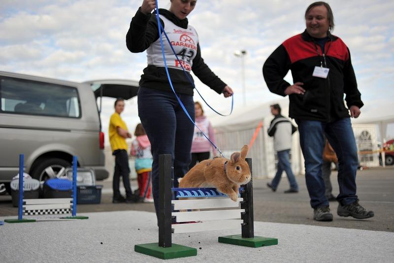 Тренировка перед началом соревнований. Фото: Harold Cunningham/Getty Images