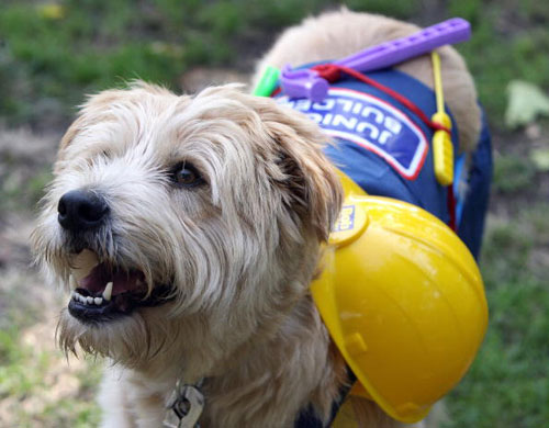 Участник костюмированного маскарада собак. Фото: GABRIEL BOUYS/AFP/Getty Images