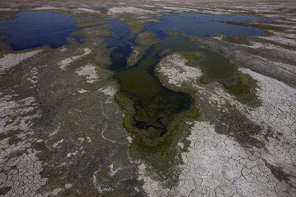 Пустынная жара стала причиной повышения концентрации соли в море Салтон, химические удобрения, принесенные водами с плантаций, стали источником пищи для сине-зеленых водорослей. Фото: Brent Stirton / Getty Images