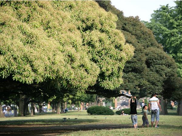Ямасіта Парк в Йокогамі, недалеко від Токіо. Фото: Kiyoshi Ota / Getty Images