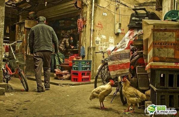 Нетрі Шанхаю. Фото: kanzhongguo.com