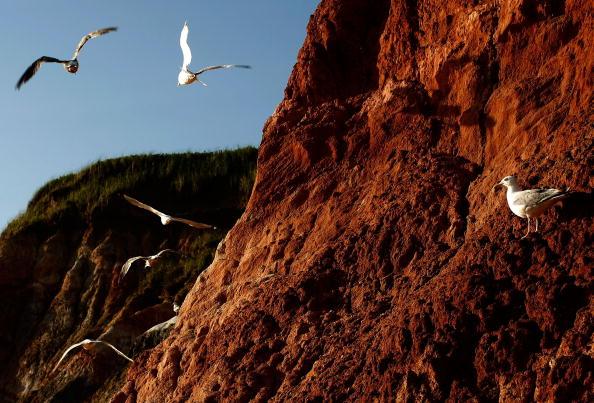 Чайки, пролетающие над красной отвесной скалой. Фото: Win McNamee/Getty Images