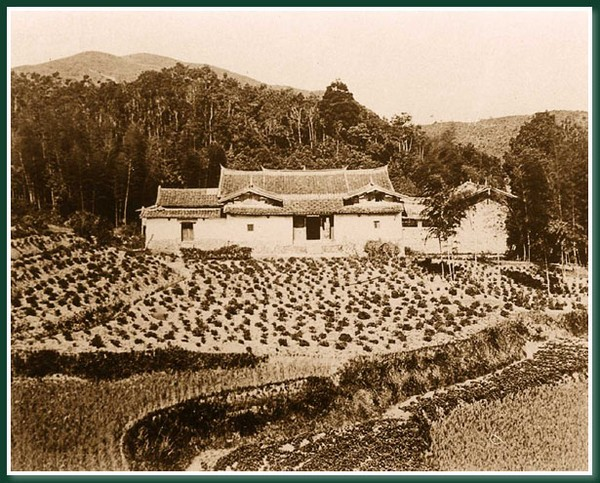 Чайная плантация. Город Фучжоу. 1860 год. Фото: Теодор Джонс