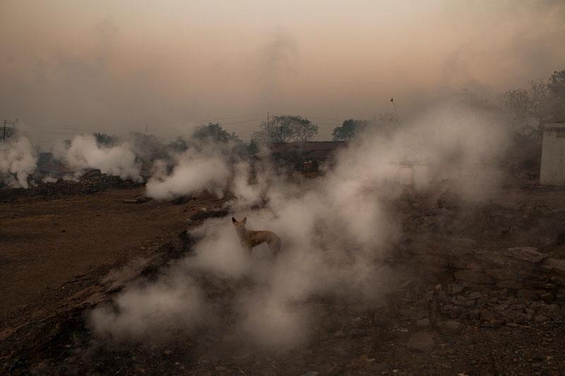 Посёлок Джина Гора. Собака в окружении клубов дыма от тлеющих угольных залежей. Фото: Daniel Berehulak/Getty Images