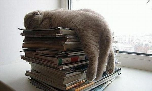 Симпатичные кошки. Фото с secretchina.com