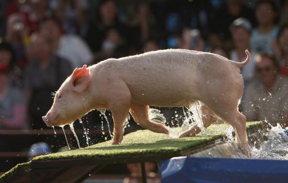 Фото: Mark Kolbe/Getty Images
