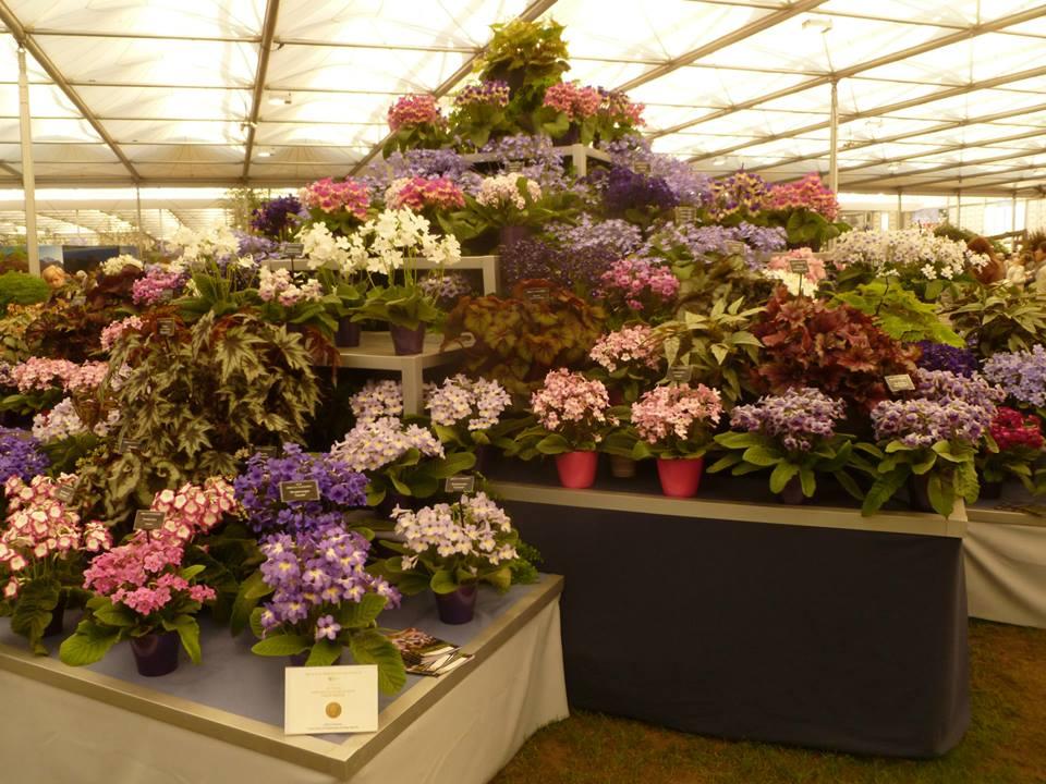 Выставочный стенд от питомника Dibleys (золотая медаль) в Большом павильоне на выставке цветов в Челси. Фото: rhschelsea/facebook.com