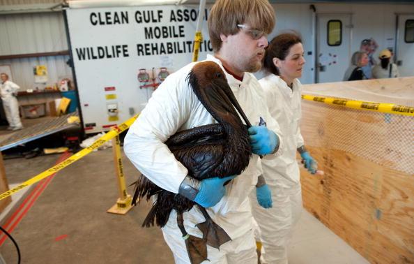 Нафтова пляма в Мексиканській затоці завдала величезної шкоди навколишньому середовищу. Фото: SAUL LOEB/AFP/Getty Images