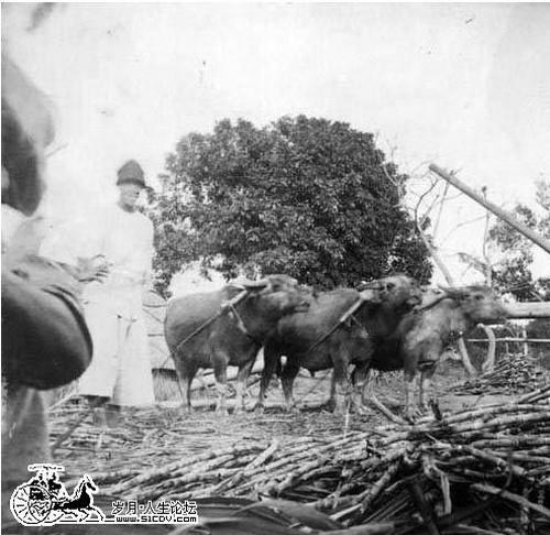 Жизнь людей во времена заката династии Цин. Фото с aboluowang.com