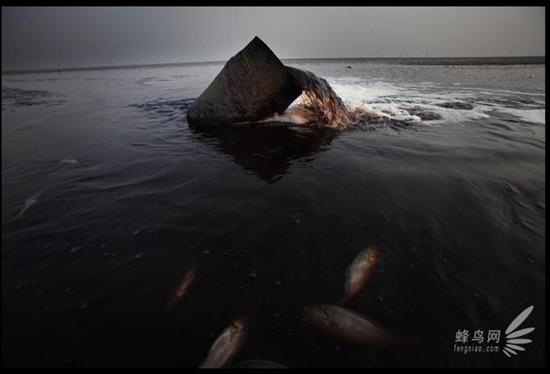 У багатьох місцях уздовж берега Жовтого моря на мілинах розташовані стічні труби підприємств. 28 квітня 2008. Фото: Лу Гуан