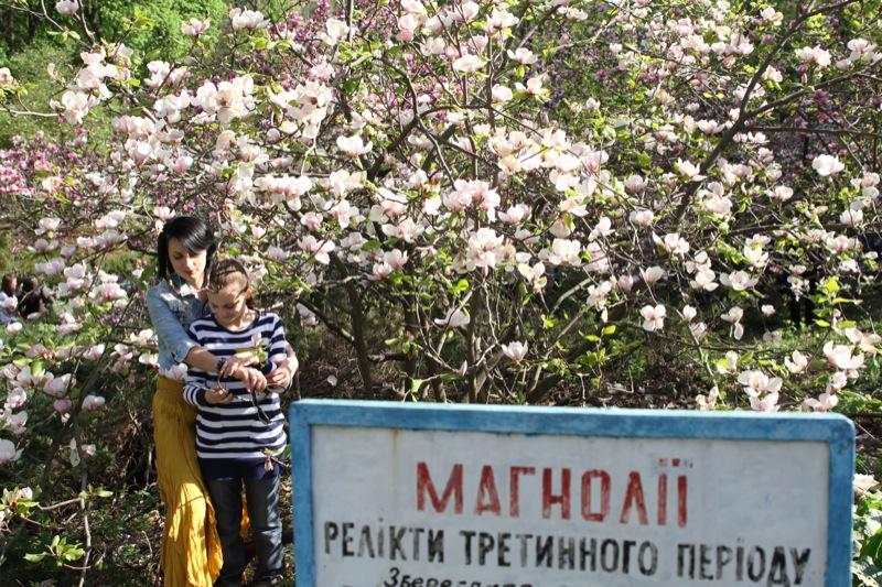 В киевском Ботаническом саду имени академика Фомина расцвели магнолии. Фото: Великая Эпоха