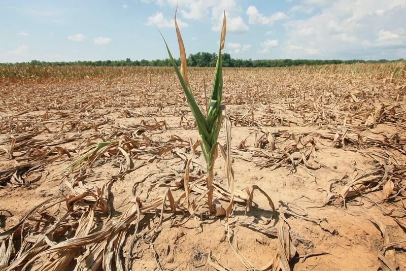 Штат Іллінойс, США, 16 липня. Сильна посуха охопила 26 штатів країни. Фото: Scott Olson/Getty Images