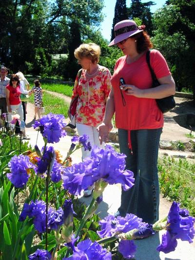 Виставка ірисів у Нікітському ботанічному саду. Фото: Алла Лавриненко/The Epoch Times Україна