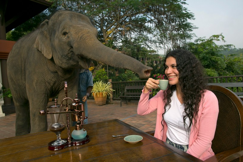 Анантара, Тайланд, 10 декабря. Слонёнку тоже хочется продегустировать кофе вместе с экспертом. Фото: Paula Bronstein/Getty Images