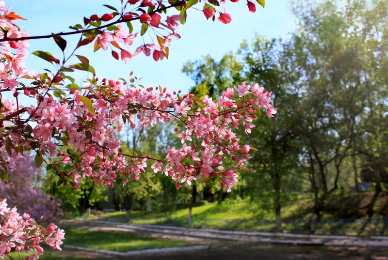 Весна в Краматорске. Фото: Валерия Мирошко