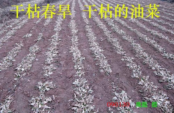 Засуха в провинции Хэнань. 3 февраля 2009 г. Фото с epochtimes.com