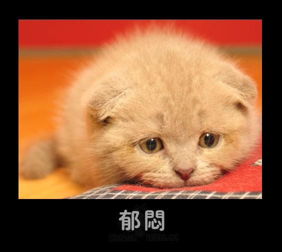 Подавленность. Фото с secretchina.com