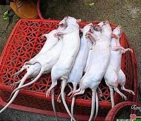 З білих мишей в Китаї роблять «голубині грудки». Фото з secretchina.com