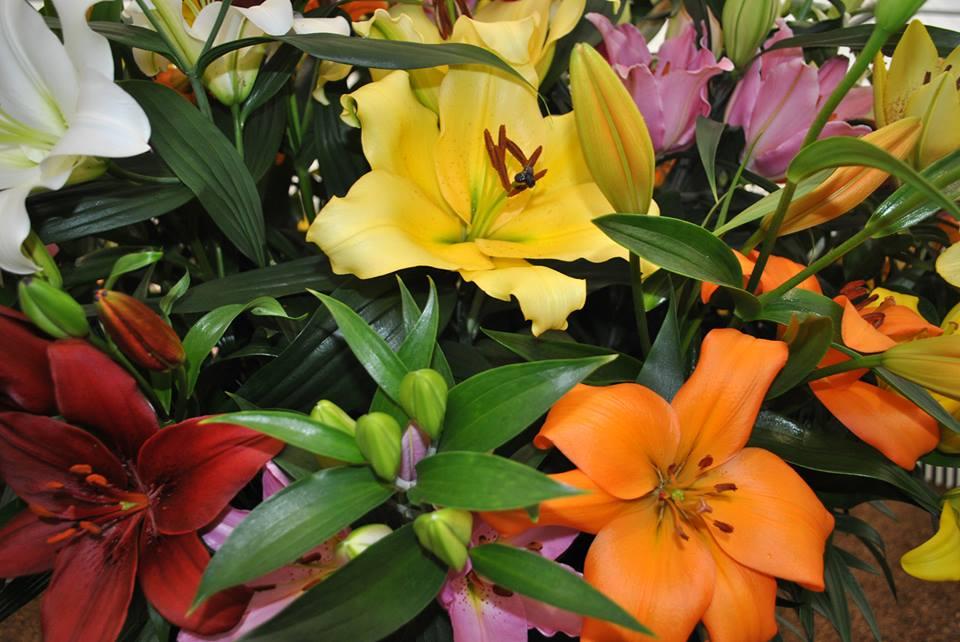 Прекрасные лилии, выращенные специально к 100-летнему юбилею цветочной выставки в Челси. Фото: rhschelsea/facebook.com