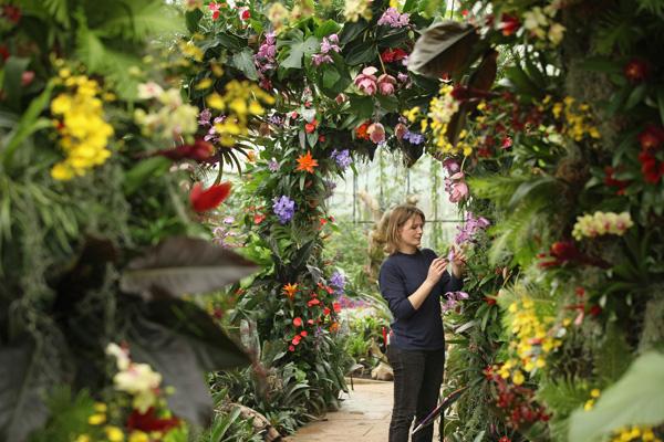 В Королівському Ботанічному Саду Великобританії Кью Гарденз 5 лютого 2011 в оранжереї принцеси Уельської відкривається щорічний фестиваль тропічних рослин. Фото: Oli Scarff/Getty Images