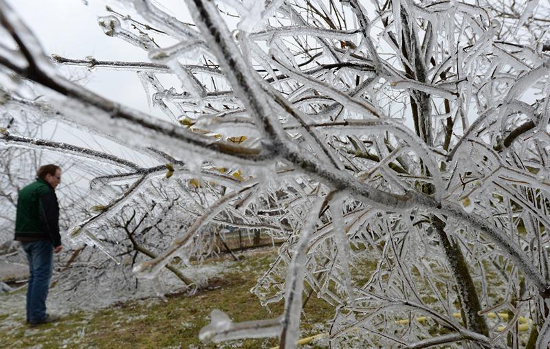 Вайтерштадт, Німеччина, 3 квітня. Раптове зниження температури призвело до утворення крижаних скульптур у саду фермера. Фото: ARNE DEDERT/AFP/Getty Images