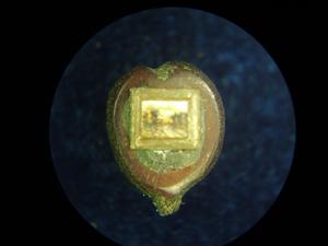 *Вечоріє*, мініатюра лежить на зрізі виноградної кісточки, розмір 1.4x1.6 мм
