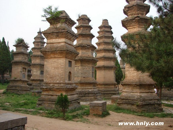 Лес пагод монастыря Шаолинь (Талинь). Фото: hnly.com