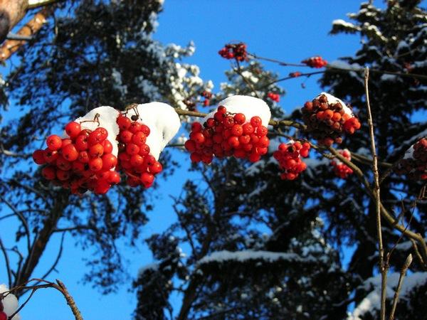 Зимовий ліс. Кіржач Володимирської області.Фото: Алла Лавриненко / The Epoch Times