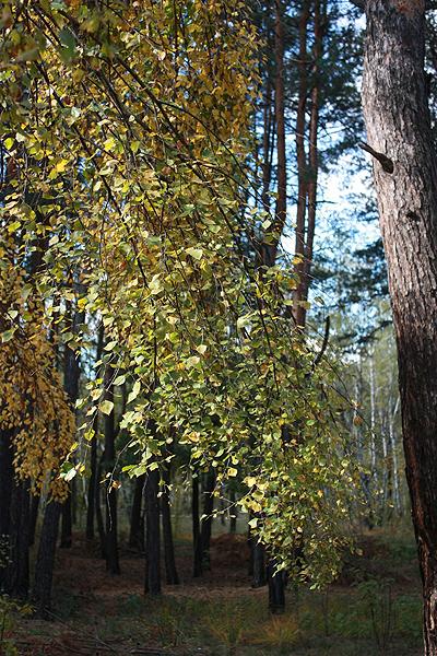 Золотая осень. Фото: The Epoch Times Украина