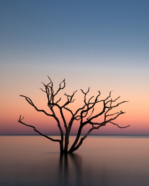 «Растущее из воды» дерево в лучах восходящего Солнца. Побережье острова Эдисто, время прилива, штат Южная Каролина. Фото: Roger Raepple/outdoorphotographer.com
