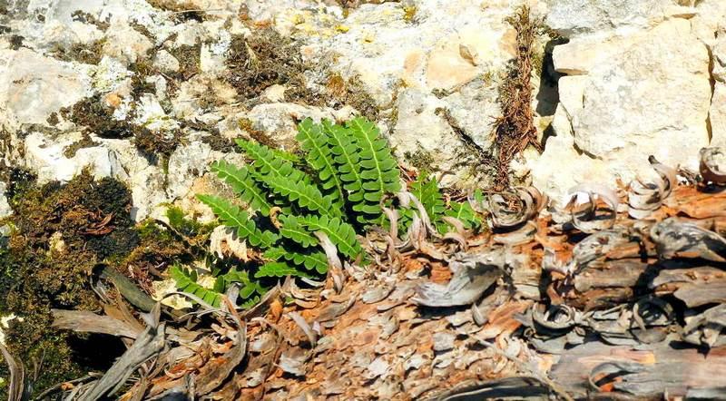 Природна ікебана з каменю, листя і кори дерева. Фото: Алла Лавриненко/The Epoch Times Україна