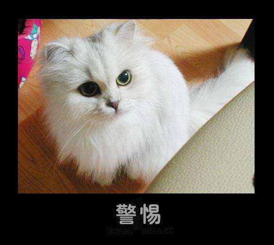 Настороженность. Фото с secretchina.com
