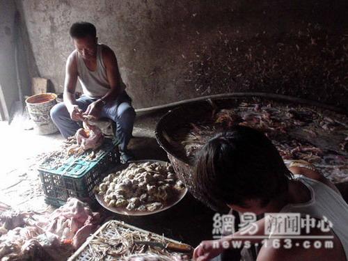 Четверо работников начинают удаление перьев с дохлых домашних птиц после вымачивания их в кипящей воде. Вымачивание происходит в ржавом котелке
