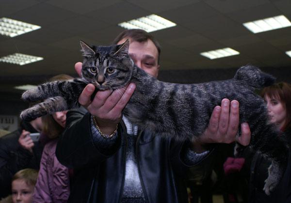 Международная выставка кошек прошла в Харькове. 14 марта 2010г. Фото:Юлия Ламаалем/The Epoch Times