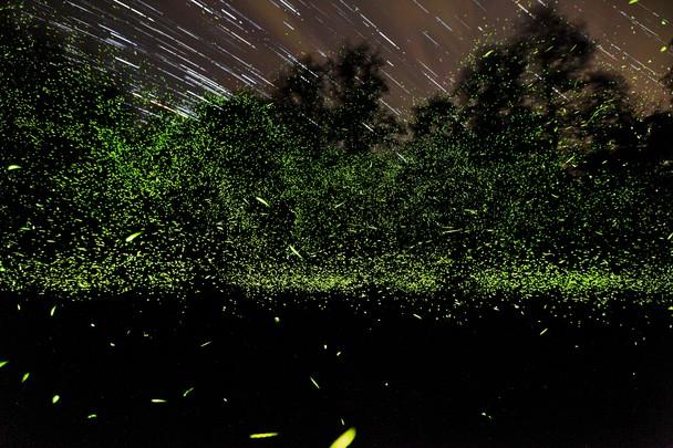 Танец светлячков. Национальный парк Грейт-Смоки-Маунтинс, США. Фото: Cheng Niu/travel.nationalgeographic.com